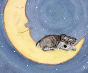 moon, dog, and schnauzer image