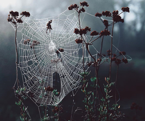 spider, nature, and cobweb image