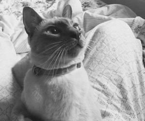 black and white, cat, and kitty image