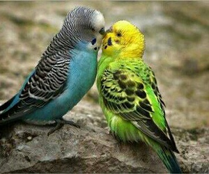 bird, love, and parrot image
