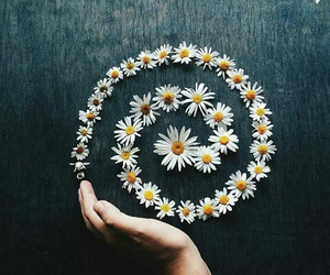 beauty, daisy, and flowers image