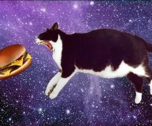spacecat image