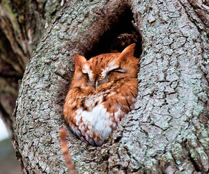 owl, animal, and tree image