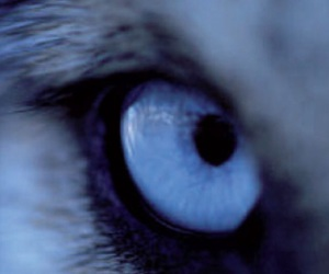 oeil and loups image