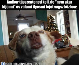 meme, dog, and funny image