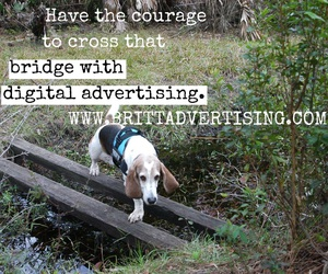 advertising, cats, and digital image