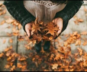 autumn, photography, and September image