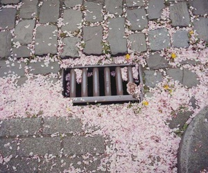 flowers, pink, and street image