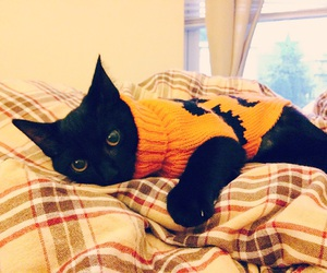 Halloween, cat, and kitty image