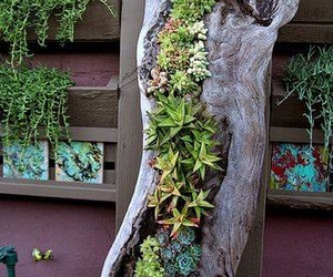 garden, succulents, and tree trunk image