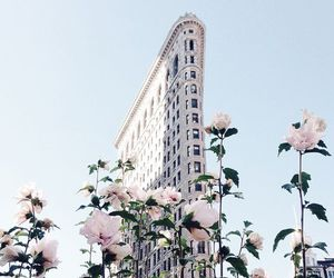 flowers, city, and building image