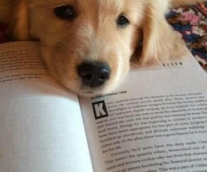 books, dogs, and pets image