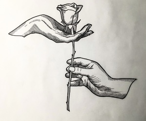 rose, flowers, and hands image