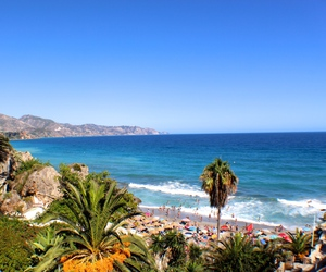 beautiful, ocean, and palm trees image