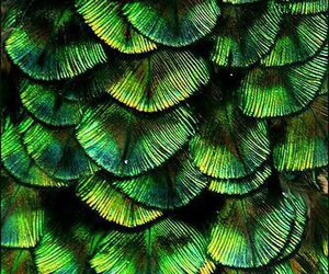 green, feathers, and blue image