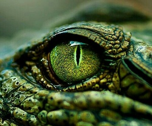 green, eye, and crocodile image