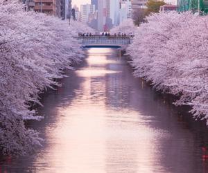 nature, beautiful, and pink image