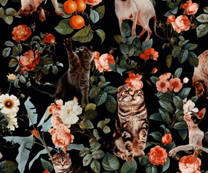 background, cat, and floral image