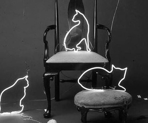 cat, neon, and light image