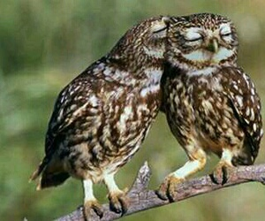owl, love, and cute image