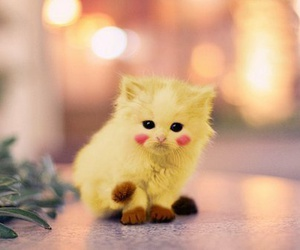 cat, cute, and pikachu image