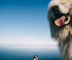 dog, love, and couple image