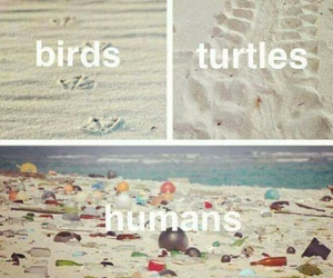 humans, turtle, and birds image