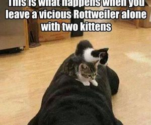 dog, funny, and kitten image