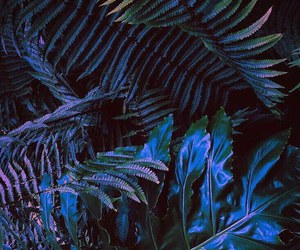plants and purple image