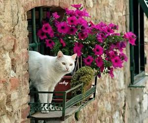 cat, pet, and animals image