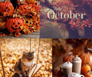autumn, cat, and october image