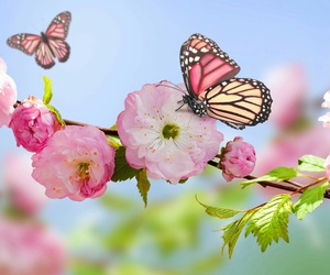 spring, butterfly, and flowers image
