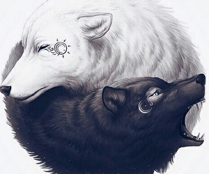 black and white and wolves image