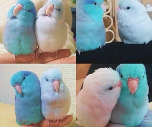 parrot, love, and pet image
