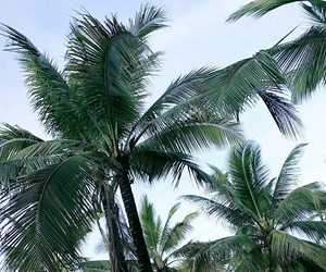 beauty, coconut, and nature image