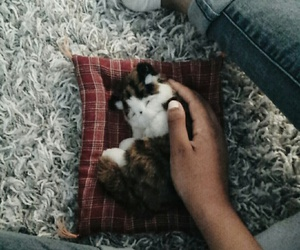 animal, header, and vscocam image