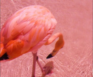 flamingo, pink, and backgrounds for iphone image
