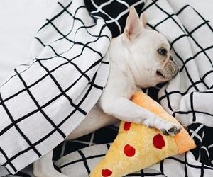 dog, adorable, and french bulldog image