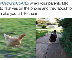 arab, hilarious, and middle east image