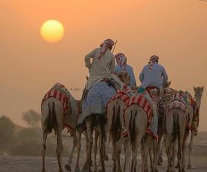 arab, arabic, and camels image