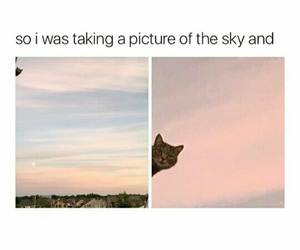 cat, funny, and sky image