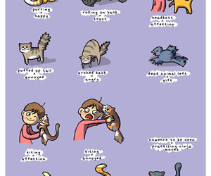cat, funny, and language image