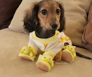 pets puppy image