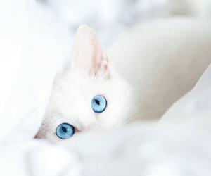 beautiful, gatito, and white image