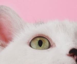 cat, header, and pink image