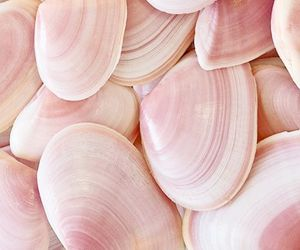 pink, shell, and wallpaper image
