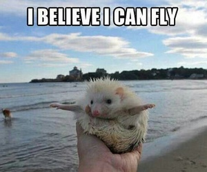 cute, funny, and fly image