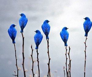 nature, bluebirds, and cute image
