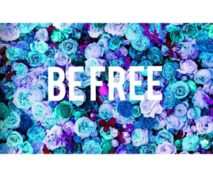 be free, colori, and rose image