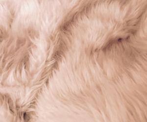 wallpaper and fur image